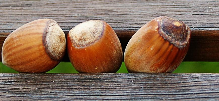 hazelnuts-440265_1280