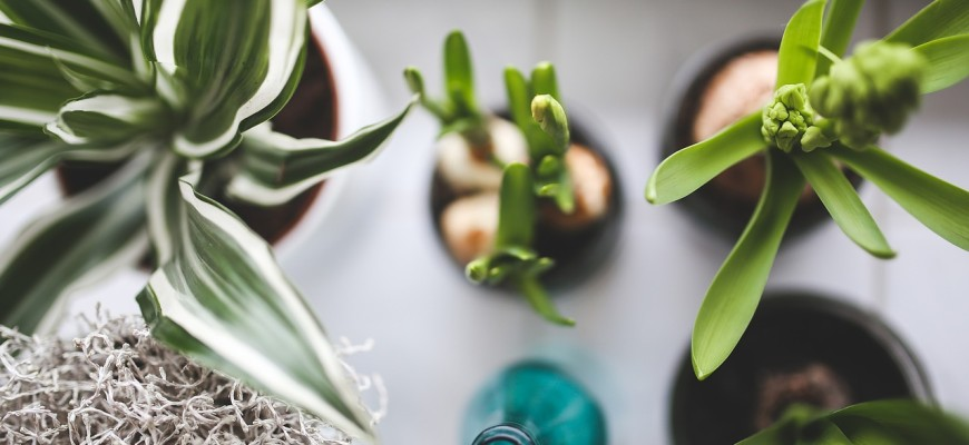plants-925808_1280