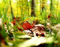 leaves-2255296_1920